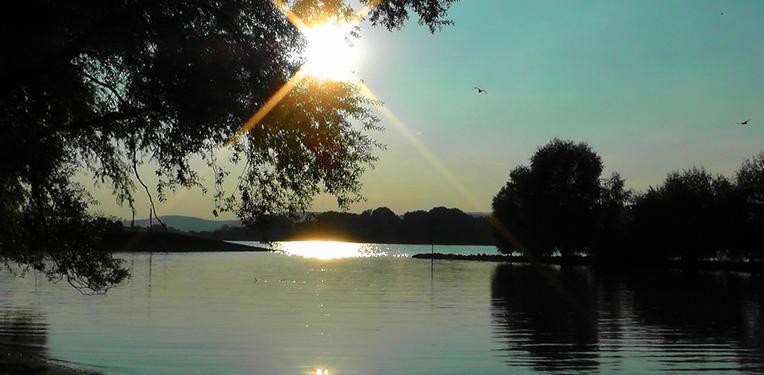 Rhine wasser
