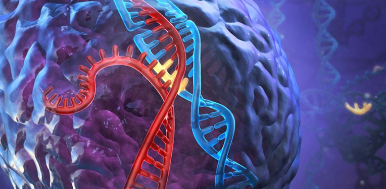 DNA_CRSIPR-Cas9_Therapeutics