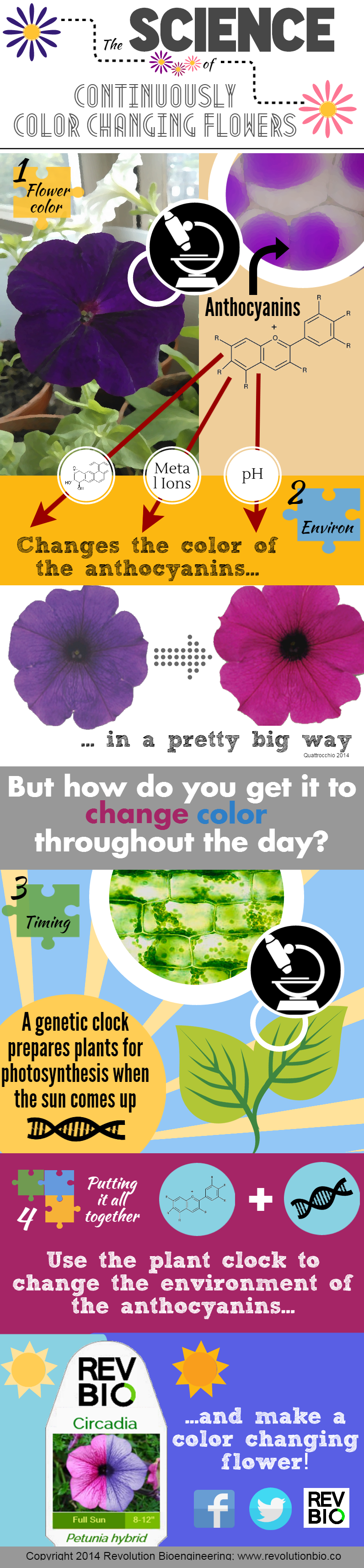Petunia_circadia_Continuously_Color_Changing_Flowers