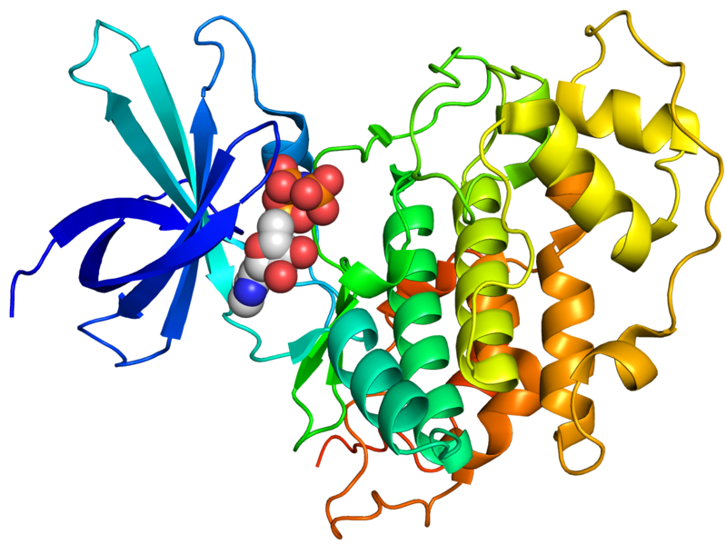 Crystallographic structure of human GSK-3.Source: BY-SA 3.0