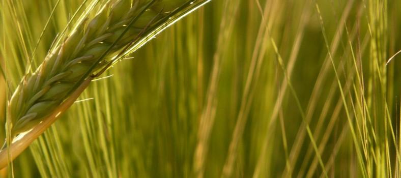 Evolva_Valent_agriculture_bioactives