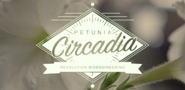 Petunia_circadia_Revolution_bio_white