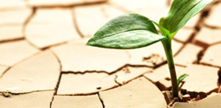 drought_tolerance_plant