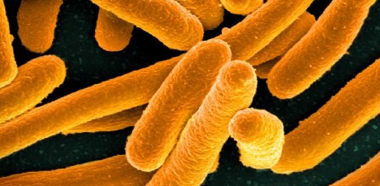 microbiome_microbiomics_seventure_partners