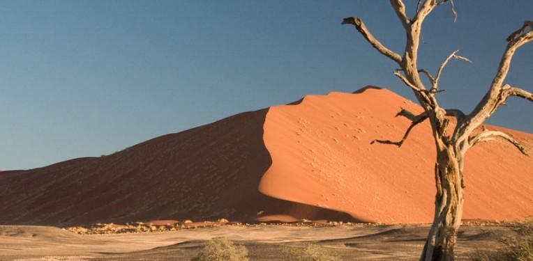 Camel Thorn Tree (Acacia erioloba) in Sossusvlei region,  Namib Desert. (CC: Luca Galuzzi)