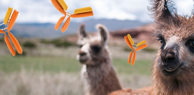 Llama monoclonal antibodies! (Llama CC: EneasMx, altered with added clipart...obviously...)