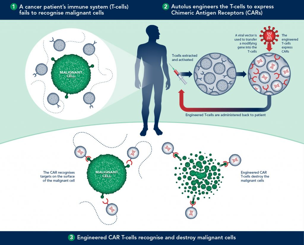 Infographic overview of how CAR-T Therapy works (Source: Autolus)