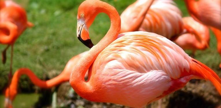 flamingo_algae_biotech