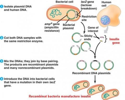 history_genentech_biotechnology
