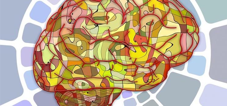 brains_imba_cerebral_organoids_neurological_disease