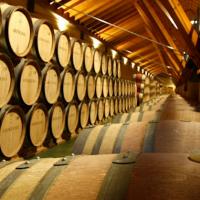 champagne_wine_biotech_fermentation