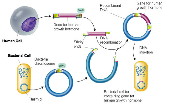 cohen-boyer-stanford-recombinant-dna-patents