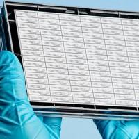 mimetas organ on chip