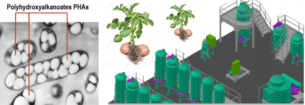 minverv_phas_bioplastics_greentech_green