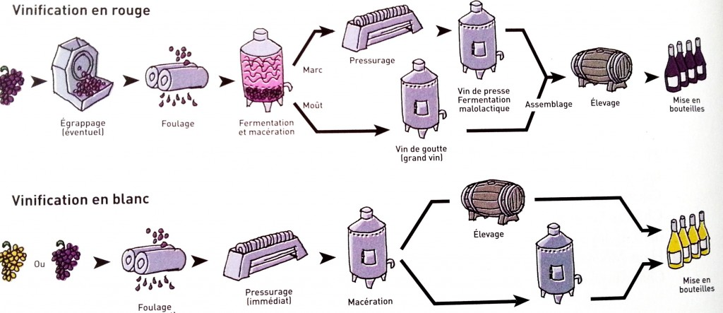 wine_champagne_biotech_fermentation_silvester_alcohol