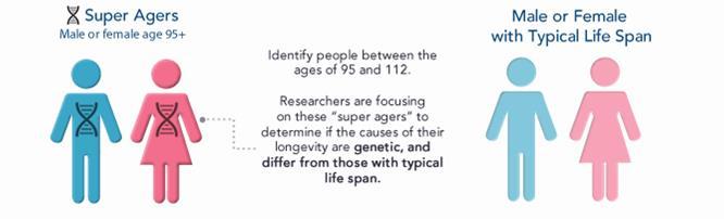 aging_longevity_einstein_ny_genes_genomics_study