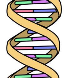 genes_genome_aging_longevity
