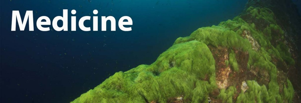 algae_industry_biotech_medicine_microalgae_astaxanthin_cancer
