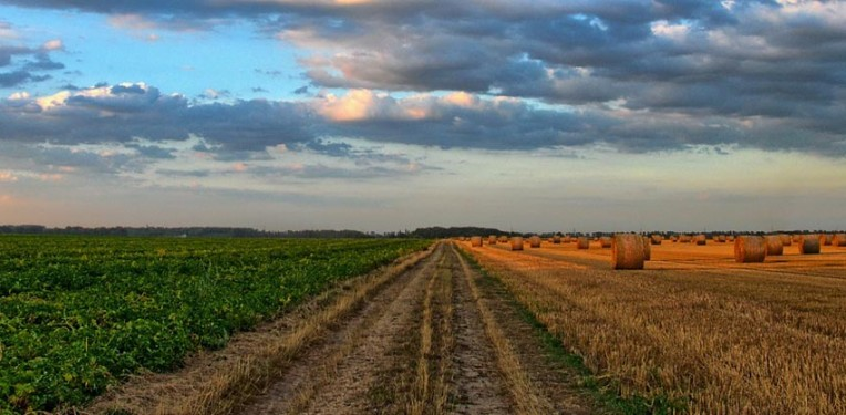 italy_agriculture_biotech_fund_crea_cisgenesis_gmo