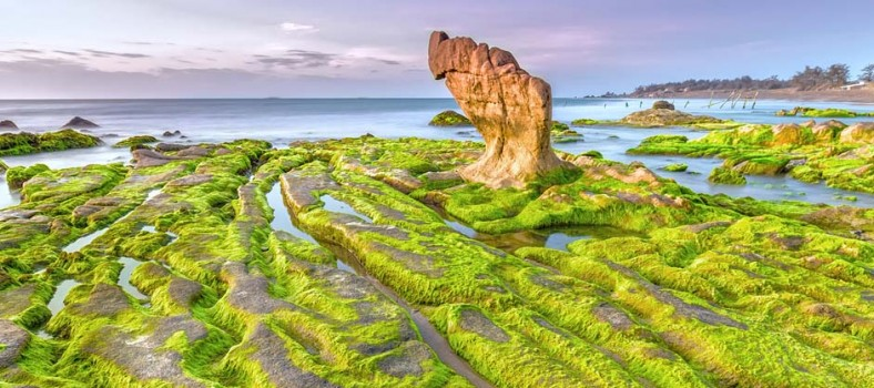 microalgae_biotech_biofuels_medicine_scrubbing_greentech_review