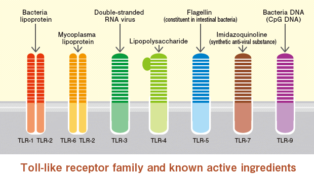 toll_like_receptors_riboxx_tolly_cancer_biotech
