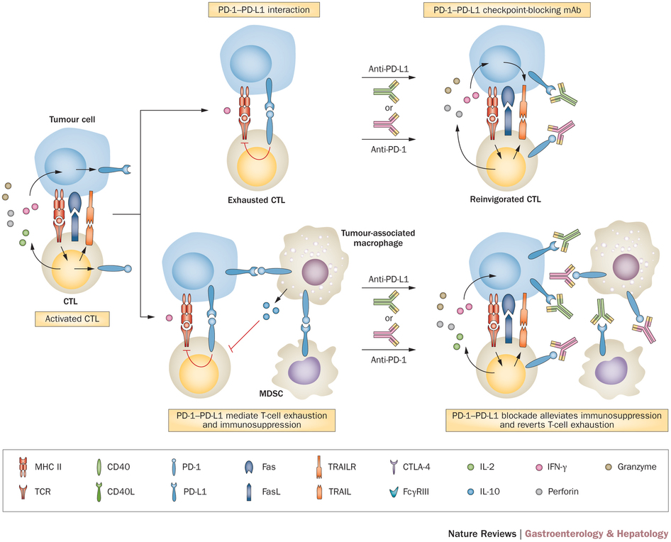 checkpoint_blocking_immuno