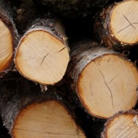 deinove_deinococci_biorefinery_green_chemistry_arbiom_biomass_wood_pretreatment_lignin_optafuel_biomethodes_bioskog