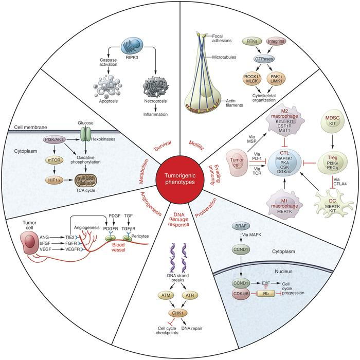 kinases_cancer_blueprint_roche_immunotherapies