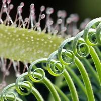 plant_technologies_greentech_sundew_biotech_pat