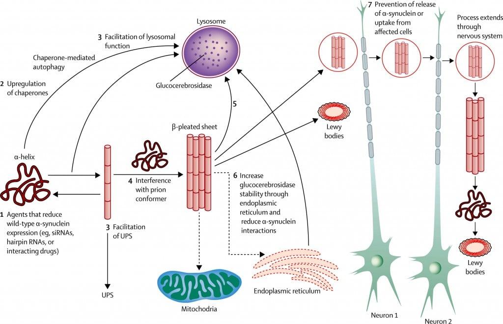 lewy_parkinson_vaccine_parkinsons_neurodegenerative_pd01_affitope
