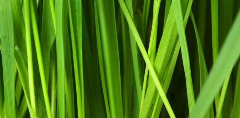 circassia_grass_allergy_peptide_spire_trial