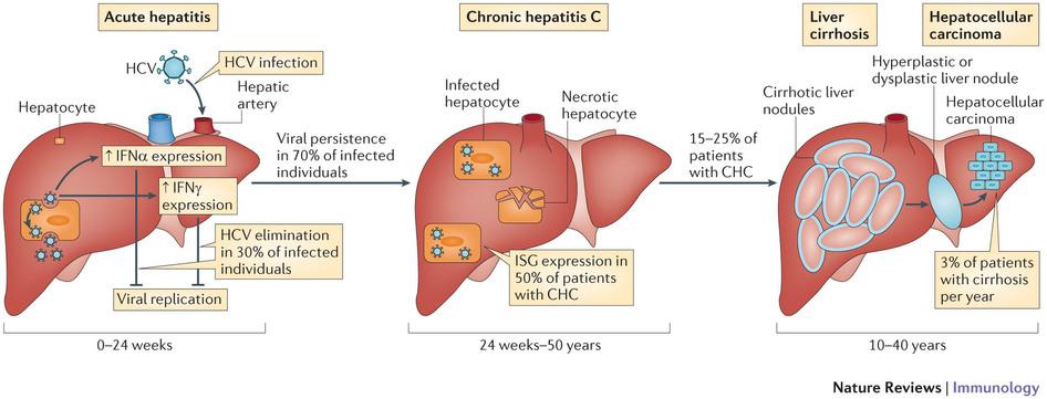 hepatitis research paper