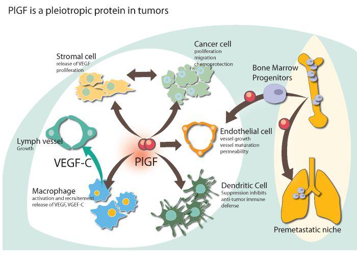 oncurious_tb_304_pgif_neuroblastoma_cancer_biotech_immunooncology_medullablastoma_brain