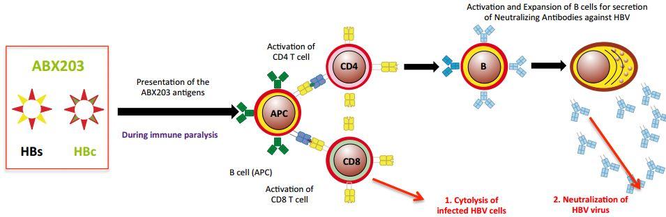 abivax_abx203_hepatitisb_cuba
