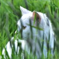 circassia_cat_grass_allergy_toleromune_spire