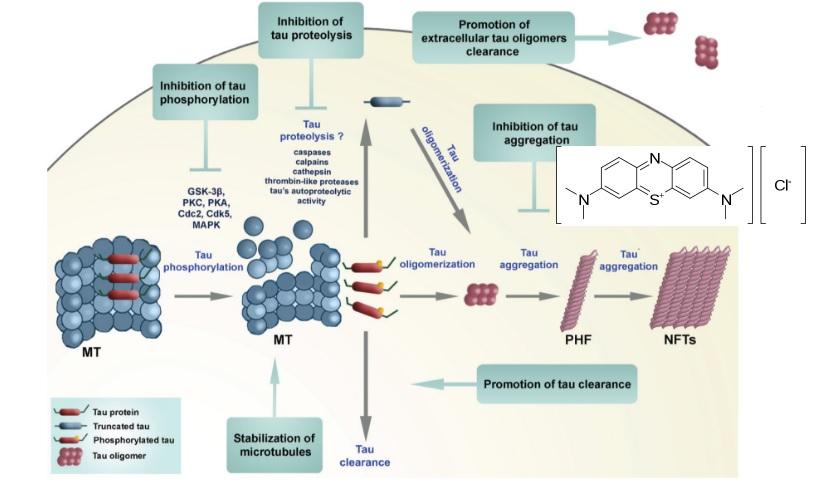 alzheimer's tau tangles drug targets methylene blue