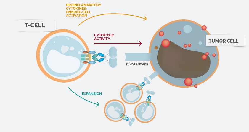 NK Killer cells Celyad ONO Biotech Therapy