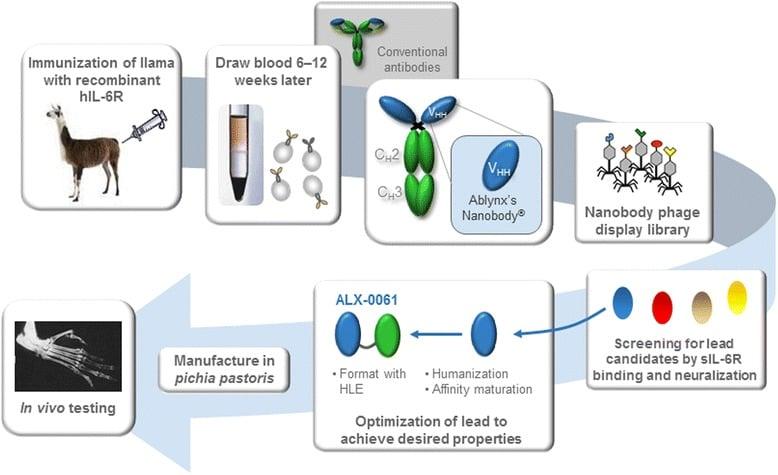 anti-il-6R alx0061 nanobody vobarilizumab rheumatism