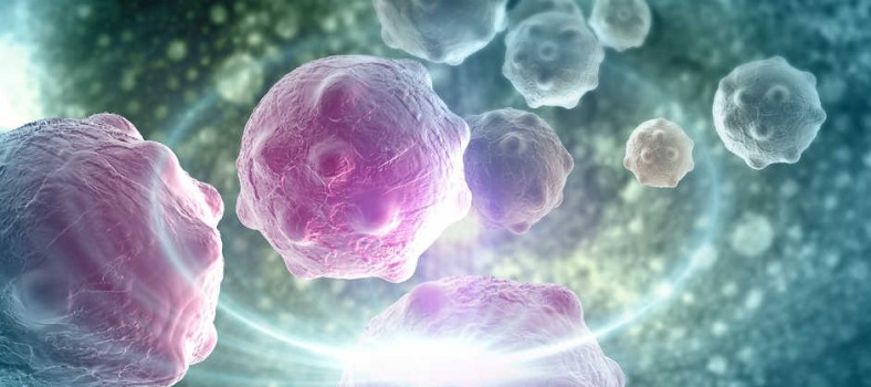 immuno-oncology history t cell therapy