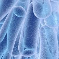 bacteria-kateryna-kon-fi