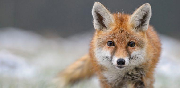 david-havel-fox-fi