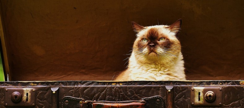 cat career jobs header