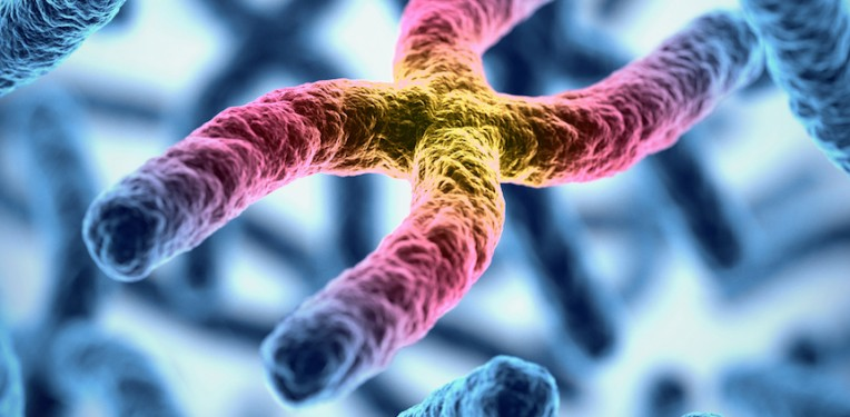 chromosome-koya979-fi