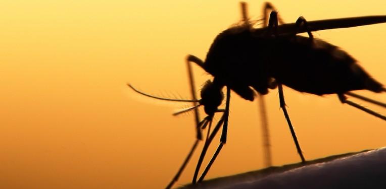 mosquito-featured-dengue