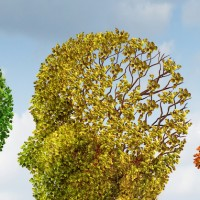 neurodegeneration-alzheimers
