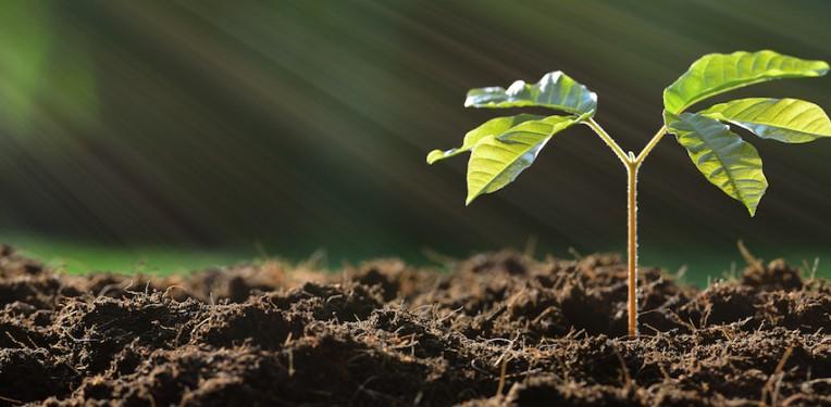 soil-amenic181-fi