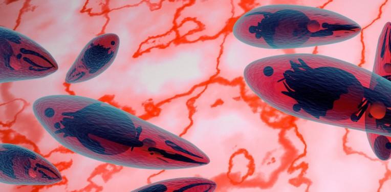 toxoplasmosis-turing-fotovapl-fi
