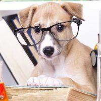 jobs_sciencedoggy2
