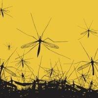 mosquitos-jamesbin