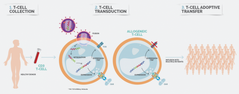 Celyad allogeneic platform